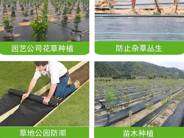 果园防草布铺设方法